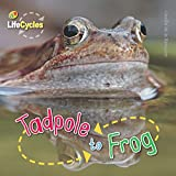 Tadpole to Frog (Lifecycles) (Qed Lifecycles)