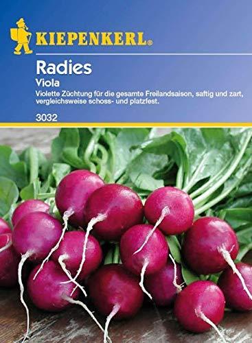 ScoutSeed Kiepenkerl - Radies Violet Viola 3032 Violet Radieschen Juicy + Tender