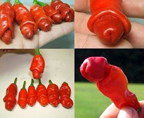 20x Penis Chili Samen Rot - Peter Pepper - Witzige Form - Lustig Party Geschenk