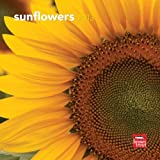 Sunflowers 2013 7X7 Mini Wall by Browntrout Publishers (2012-07-09)