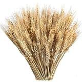 Msrlassn Pasto de Trigo seco Flores Ramo secas de Trigo Artificial Natural para Chimenea Hogar Cocina Iglesia Mesa Decoración