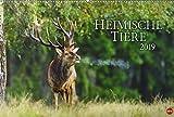 Heimische Tiere - Kalender 2019