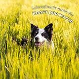 AniForte® PureNature Nassfutter 400g Land Chicken Hundefutter- Naturprodukt für Hunde (Zartes Huhn, 6x400g) - 5