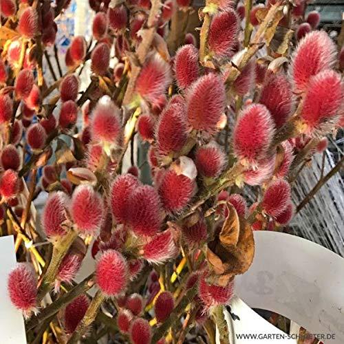 Unterpflanzung winterharte eßbare