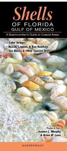 Shells of Florida-Gulf of Mexico: A Beachcomber's Guide to Coastal Areas: Written by Jeanne L. Murphy and Brian W. Lane, 2012 Edition, (Lam Chrt) Publisher: Quick Reference Publishing, Inc. [Pamphlet]