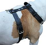 Nero in pelle vera, pettorina per cani grandi. 68,6- 94cm torace 3,2cm, spalline larghe Pit Bull, Boxer