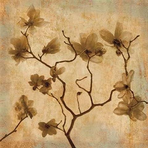 Impresión de Arte Fino en lienzo : Magnolias I by Kelly, Caroline - Medio (96 x 96 Cms)