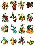 Flonz Papier fur Scrapbooking und Decoupage (10 blatt 20x30cm) Obst und Gemuse Vintage Motivpapier