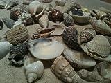 Muschel Deko 150 Gramm und Dekosand 1 Kg - zur Fischernetz Dekoration - maritimes