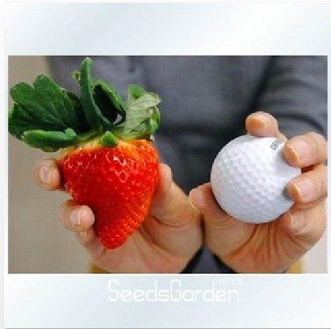 Légume Fruit Graines de graines de carotte anti-âge de Rainbow 'Graines Carotte plantes Nourrissant Bonsai 100 pièces / 1 Professional Paquet