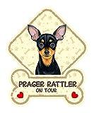 SAB Hundeschild mit Saugnäpfen für die Autoscheibe PRAGER RATTLER 41