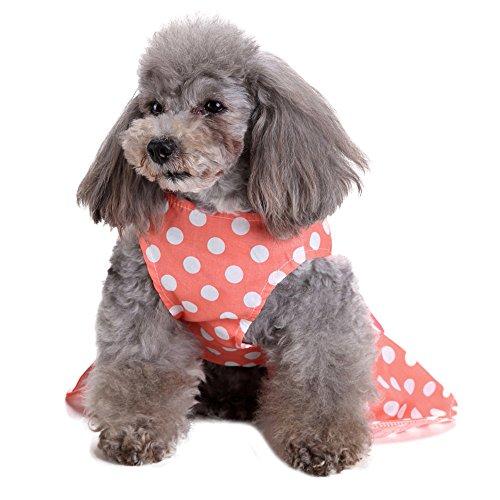 Goldatila Pet Kleidung Pet Rock Orange Frühling und Sommer Cute Dress Dog Kostüme Haustier Kleidung