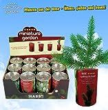 """Miniature Garden """"Weihnachtsbaum"""" zum Selbstzüchten"""