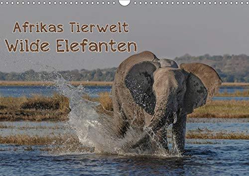 Afrikas Tierwelt - Wilde Elefanten (Wandkalender 2020 DIN A3 quer): Wild und...