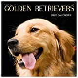 Golden Retrievers 2020 Calendar