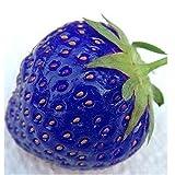 Yukio Samenhaus - 100 Stück Erdbeere semi-großfruchtig Temptation Gartenerdbeere Saatgut mit Waldbeer-Aromen