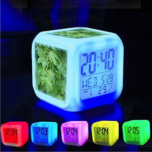 Wecker wachen Schlafzimmer mit Daten und Temperatur-Anzeige auf (ver?nderbare Farbe) Fertigen Sie pattern-174 besonders an. Feld-Ahorn (Acer campestre) in der Blume