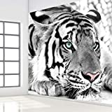 3D Murales Papel Pintado Pared Calcomanías Decoraciones Fondo De Entrada De Dormitorio De Sala De Estar De Tigre Animal Blanco Negro Art º Chicas Tv (W)250X(H)175Cm