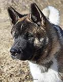 Notebook: Akita American pet dog canine animal mammal dogs puppy puppies guard dog training breeds