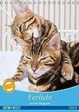 Verliebt in zwei Bengalen (Tischkalender 2019 DIN A5 hoch): Fotografien zweier Bengalkatzenkinder (Monatskalender, 14 Seiten ) (CALVENDO Tiere)