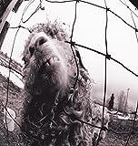 Songtexte von Pearl Jam - Vs.