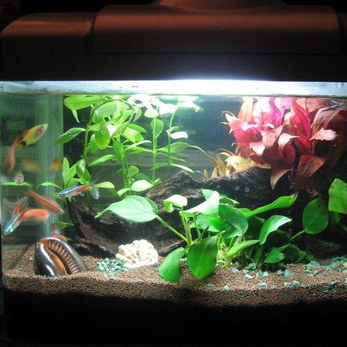 Lumi re tank poisson for Aquarium poisson rouge lumiere