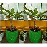 "Evergreen Terrace Gardening Leafy Vegetable Green Grow Bag, 24 X 24 "" (Pack Of 2 )"
