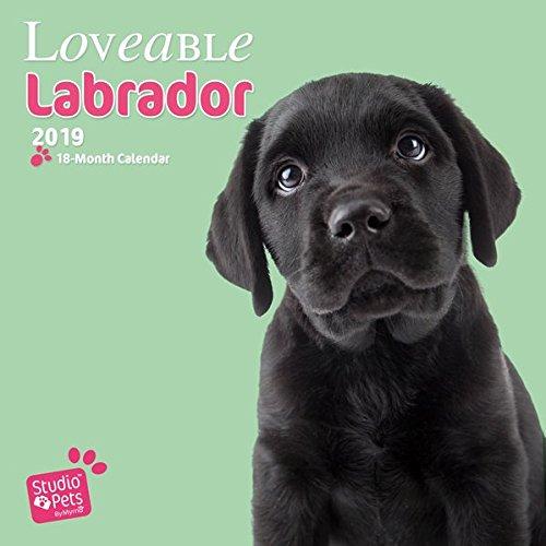 Lovable Labrador - Labrador Retriever 2019 - 18-Monatskalender (Myrna-Kalender)