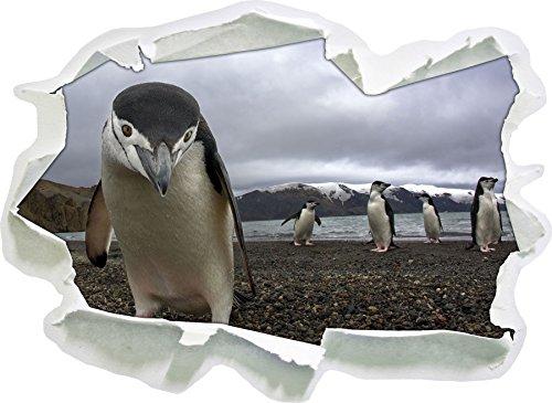 Funny penguins, carta 3D della parete di