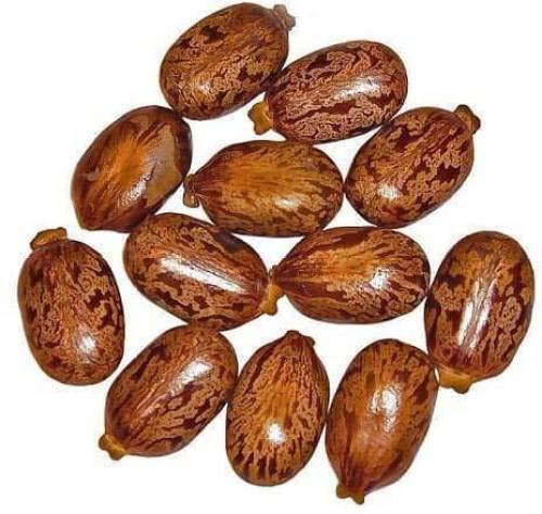 Pinkdose Castor Seeds - Castor Oil Seed - Ricinus Communis - Arandi Ke Beej - 250 G Seed -