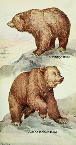 The Poster Corp Olive Otis - North American Mammals 1928 Brown & Grizzly Bears Kunstdruck (60,96 x 91,44 cm)