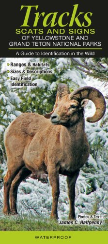 Tracks, Scats & Signs of Yellowstone & Grand Teton National Parks: A Guide to Identification in the Wild por James Halfpenny