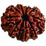 AJ 10 Mukhi Rudraksha Bead Nepal (IGL Certified) (21.23mm,...