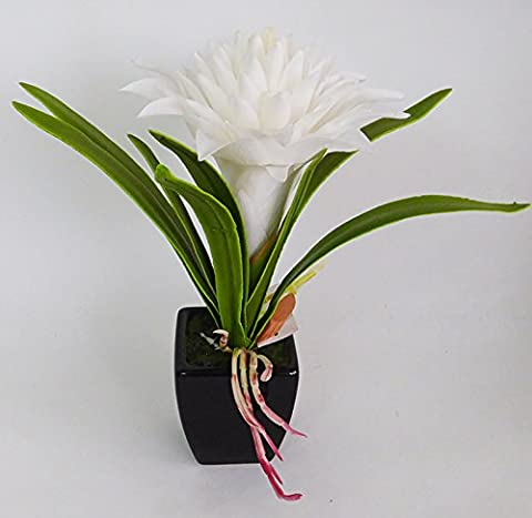 Billbergia Latex White with Black Pot of Earthenware 28 cm