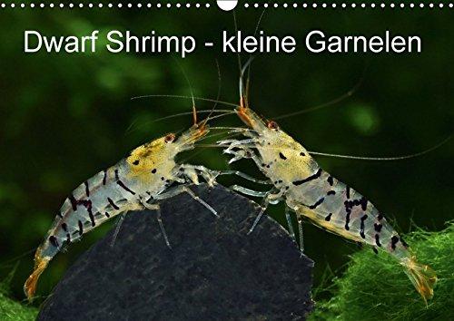 Dwarf Shrimp - kleine Garnelen (Wandkalender 2017 DIN A3 quer): Faszination der Farben: Zwerggarnelen (Monatskalender, 14 Seiten ) (CALVENDO Tiere)