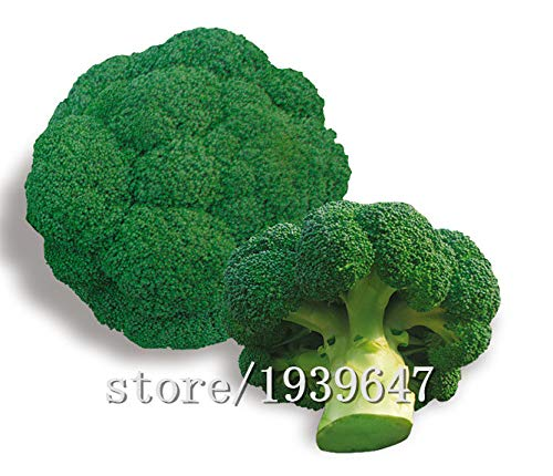 AGROBITS Ding grünen Brokkoli Samen Gemüsesamen 50seed: Andere