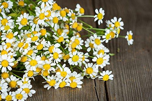 Mutterkraut Chrysanthemum parthenium 400 Samen