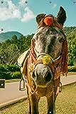 Wallario Garten-Poster Outdoor-Poster, Klassisch geschmücktes Pony in Premiumqualität, für Den Außeneinsatz Geeignet