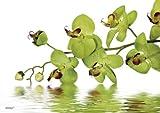 Tischset Platzset abwaschbar Green Orchid von ARTIPICS 4er-Set Kunststoff