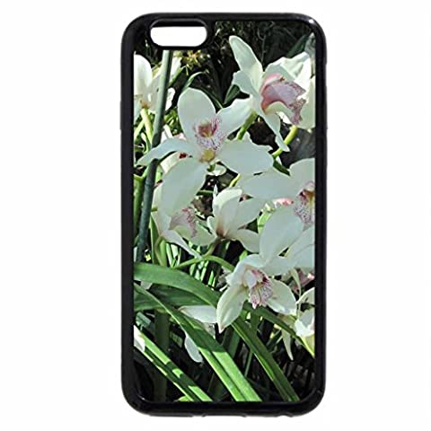 iPhone 3S/iPhone 6 Coque (Noir) printemps Arbre de cornouiller