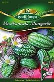 Mexikanische Mini-Gurken von Quedlinburger Saatgut