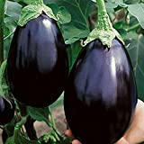 Black Beauty Brinjal / Eggplant Seeds by National Gardens