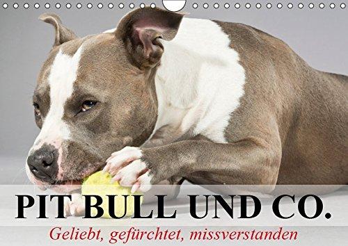 Pit Bull und Co. - Geliebt, gefürchtet, missverstanden (Wandkalender 2019 DIN A4 quer): Listenhunde zwischen Wahrheit und Hetze. (Monatskalender, 14 Seiten ) (CALVENDO Tiere) -