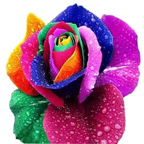 Regenbogen Rose / Einhornrose / Bunte Rose / ca. 50 Samen / Rosensamen / Geschenk für Verliebte / Geburtstagsgeschenk (Garten-blumen Bunte)