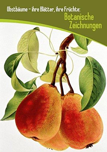obstbaume-ihre-blatter-ihre-fruchte-botanische-zeichnungen-tischaufsteller-din-a5-hoch-lehrreiche-dr