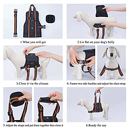 PETBABA Dog Lifting Harness, Lift Support Sling to Help Pet with Weak Back Leg, Aid Mobility and Rehabilitation… 7