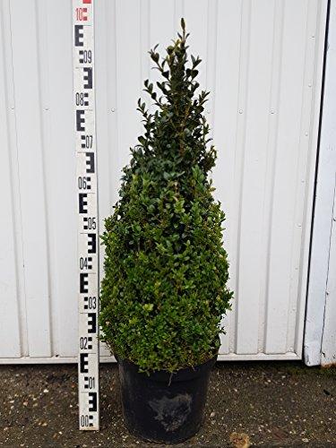 2 Buchsbaum Kegel/Pyramiden, 90cm hoch