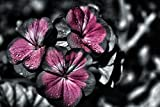 hansepuzzle 27027 Natur - Blumen, 2000 Teile in hochwertiger Kartonbox, Puzzle-Teile in wiederverschliessbarem Beutel