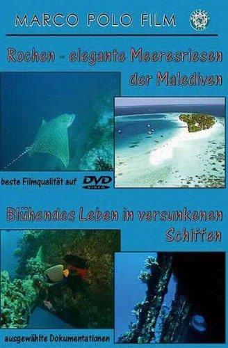 Rochen-elegante Meeresriesen der Malediven/Blühendes Leben der versunkenen Schiffe