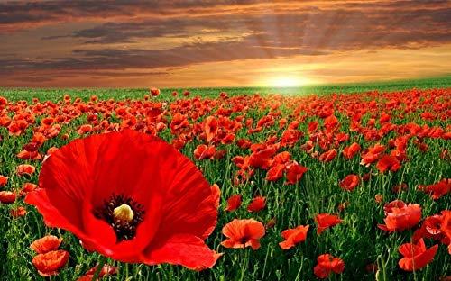 Geschenk-Ausgangsdekoration-Sonnenuntergang-Schöne Rote Mohnblumen-Blumen-Feld-Landschafts-DIY Für Erwachsenes Kind Malen Durch Zahlen 40X50CM Ohne Rahmen